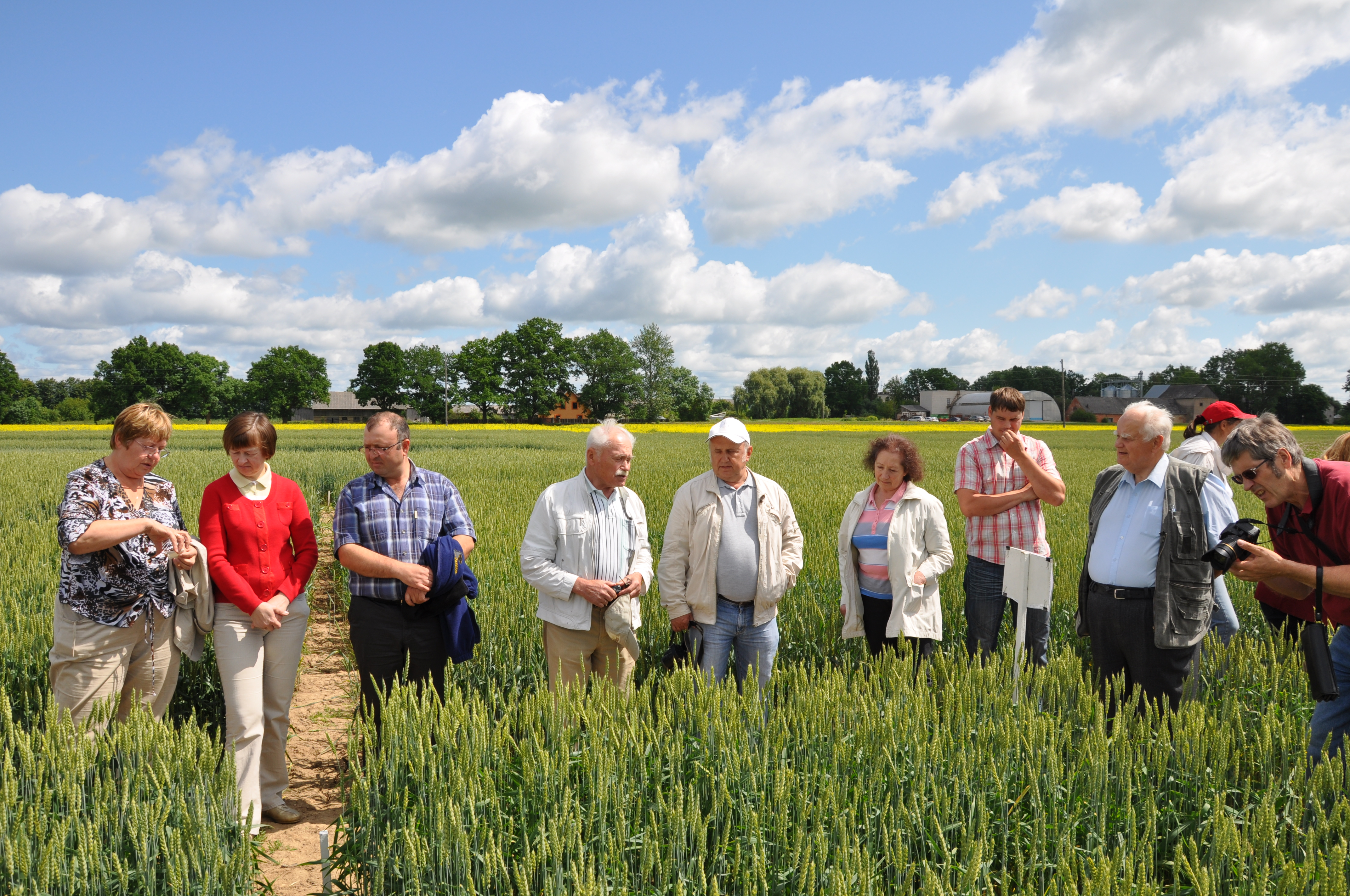 LAAFS surveyed cereals volume in the Priekuli Plant Breeding Institute